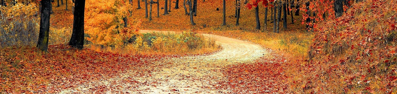 A gravel pathway in the Autumn