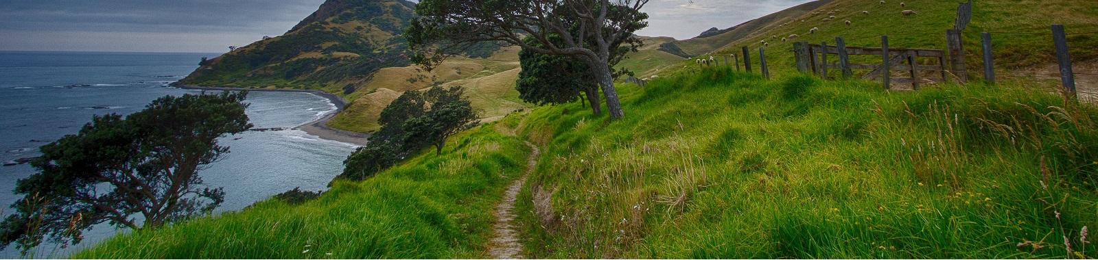 A path leading along the sea cliffs